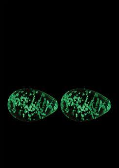 Firefly Glass Kegel Eggs
